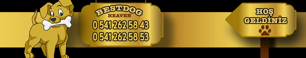 BestDog Heaven – Bursa Köpek Çiftiği – Satılık yavru köpek ilanları