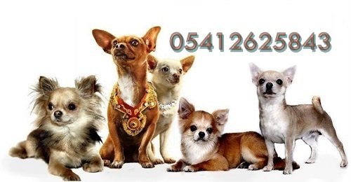 Şivava (Chihuahua)