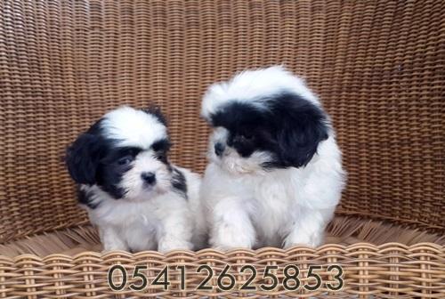 satılık köpek ilanı